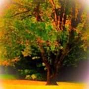 Wild Cherry Tree In Summer Sun Art Print