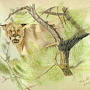 Wild Cougar Art Print