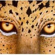 Wild Eyes Art Print by Lorraine Foster