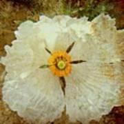 Ivory White Wildflower  Art Print