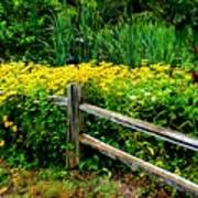 Wild Flowers And Fence Art Print