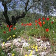 Wild Flowers And Olive Tree Art Print