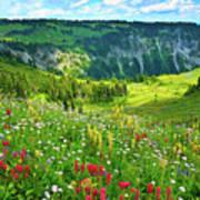 Wild Flowers Blooming On Mount Rainier Art Print