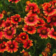 Wild Flowers In Field Color Art Print Art Print