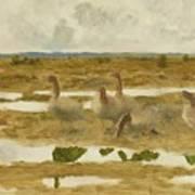 Wild Geese In The Marsh Art Print