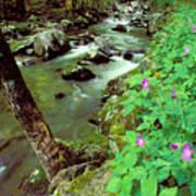 Wild Geraniums On Bradley Fork Art Print