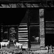 Wild Goats Ghost Town White Oaks New Mexico 1968 Art Print