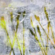 Wild Grass 3 Art Print
