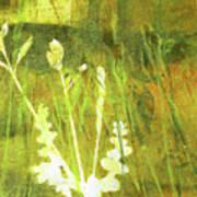 Wild Grass 7 Art Print
