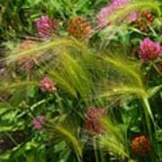 Wild Grasses And Red Clover Art Print