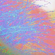 Wild Grasses In The Sun Art Print