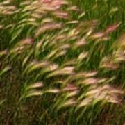 Wild Grasses Art Print