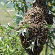 Wild Honey Bees Art Print