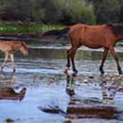 Wild Horse And Foal Cross Salt River Art Print