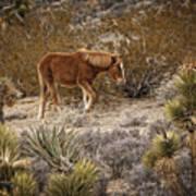 Wild Horse At Cold Creek Art Print