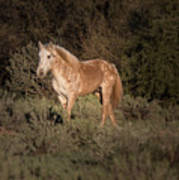 Wild Horse At Sunset Art Print