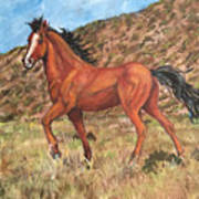 Wild Horse In Virginia City, Nevada Art Print