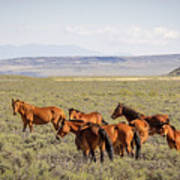 Wild Horse Mesa Art Print