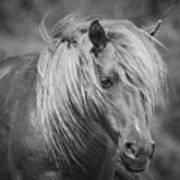 Wild Horse Of Assateague Art Print
