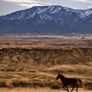 Wild Horse On The Run Art Print