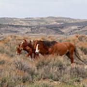 Wild Horse Trio Art Print