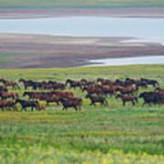 Wild Horses #34 Art Print