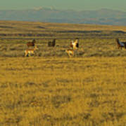 Wild Horses And Antelope-signed-#2216 Art Print