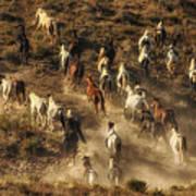 Wild Horses Gone Wild Art Print