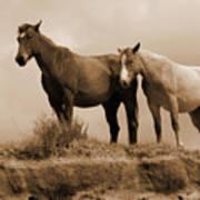 Wild Horses In Western Dakota Art Print