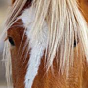 Wild Horses In Wyoming Art Print