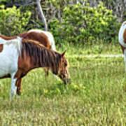 Wild Horses Of Assateague 5 Art Print