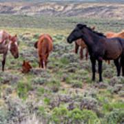 Wild Horses Of White Mountain Art Print