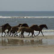 Wild  Horses Run On The Beach Art Print