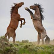 Wild Horse Challenge Art Print