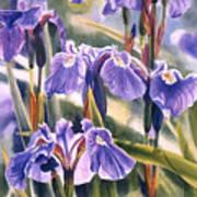 Wild Irises #1 Print by Sharon Freeman