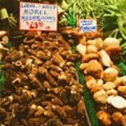 Wild Morell Mushrooms Print by Lydia L Kramer