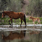 Wild Mother And Foal Horses Walk In The Salt River  Art Print
