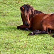 Wild Mustang At Rest Art Print