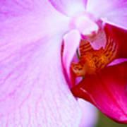 Wild Orchid 2 Art Print