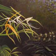 Wild Orchids Art Print