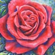 Wild Rose Three Art Print