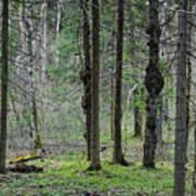 Wild Spring Forest Art Print
