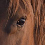 Wild Stallion's Eye Art Print