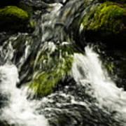 Wild Stream Of Green Moss Art Print