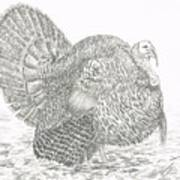 Wild Tom Turkey Art Print