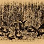 Wild Turkeys Print by Bill Cannon