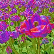 Wild Version Pink And Purple Tulips Art Print
