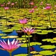 Wild Water Lilies 3 Art Print