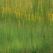 Wildflower Fields Abstract Art Print