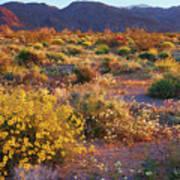 Wildflower Meadow At Joshua Tree National Park Art Print